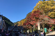 Photo of colored leaves in front of cable car station